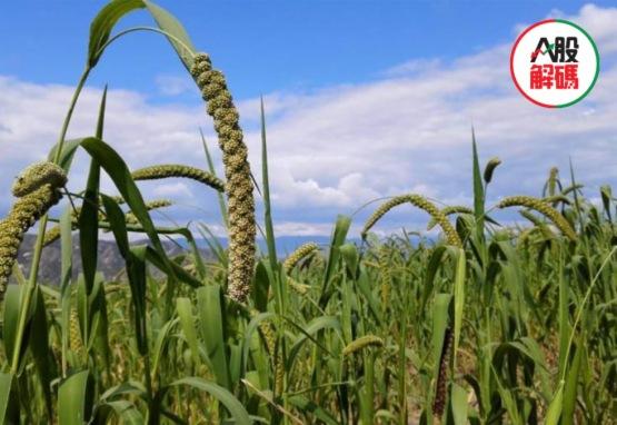 高層罕見定調餐飲浪費現象 糧食危機隱現農業板塊強勢爆發
