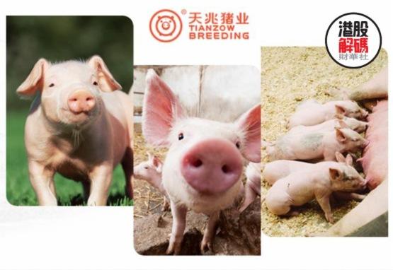 天兆豬業:現代種豬巨頭赴港IPO,提升下遊產能保持高質量發展